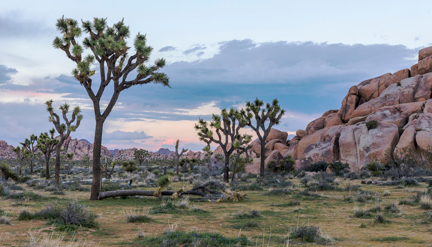 The 29 Palms entrance to Joshua Tree National Park, one million acres of unspoiled Mojave Desert wilderness is located about three miles to the south.